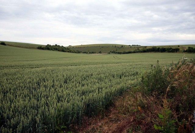 Cornfield Wylye Valley