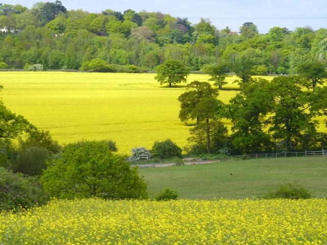 Fields at Edgwarebury