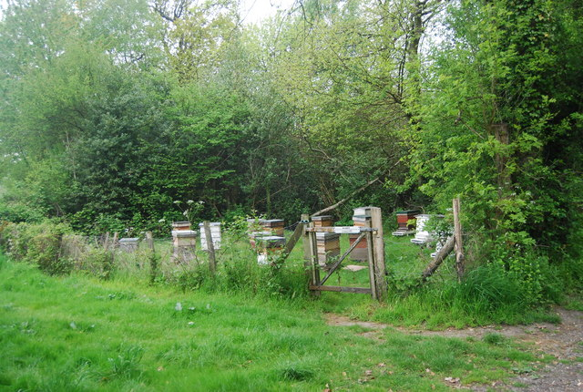 Beehives by the Sussex Border Path