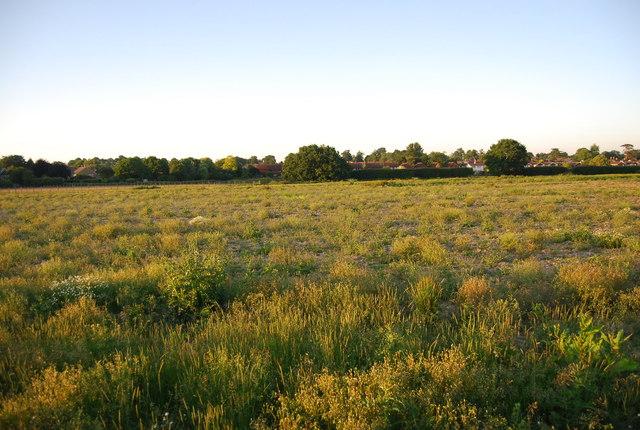 Abandoned field, Hawden Farm