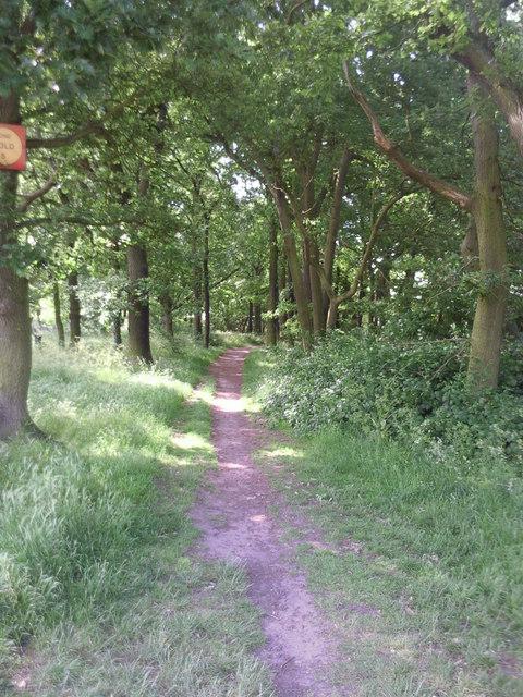 Path through woodland on Bostall Heath