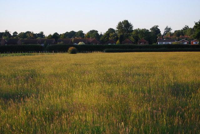 Abandoned grassy field, Hawden Farm