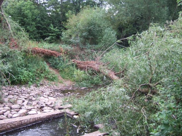 Fallen tree in mill leat