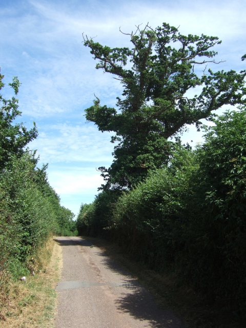 Minor road west of A376 at Ebford