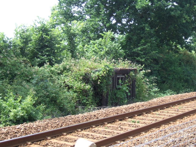 Overgrown railside hut, Lympstone