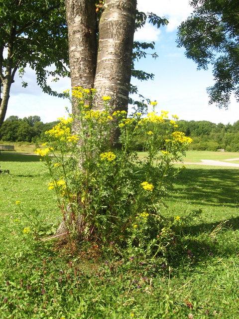 Cosmeston Flora