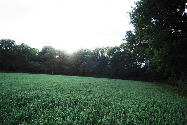 Eight Acre Wood and wheat