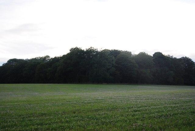 Woodland near Hale Oak Farm