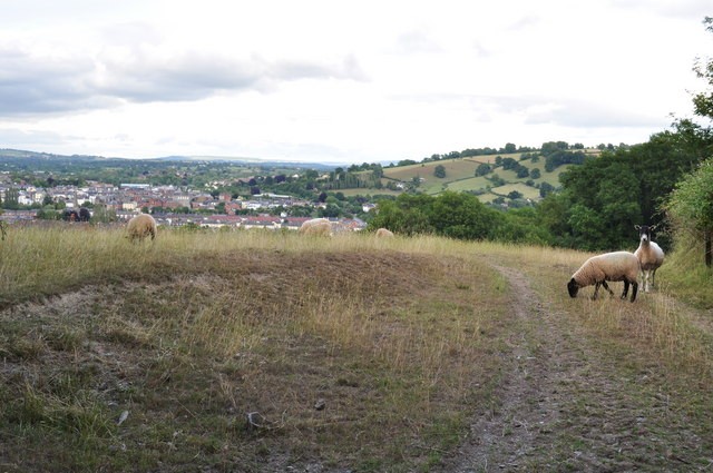 Tiverton : Sheep in a Field