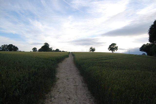 Footpath through the wheat to Sharp's place