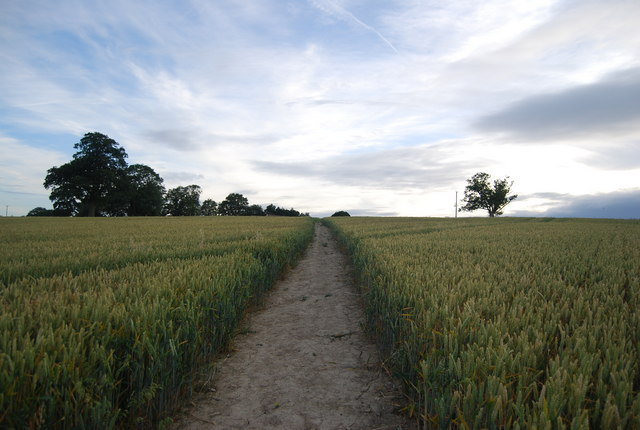 Footpath through the wheat fields