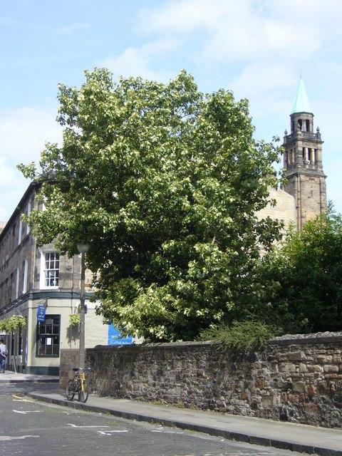 Tree in William Street, West End
