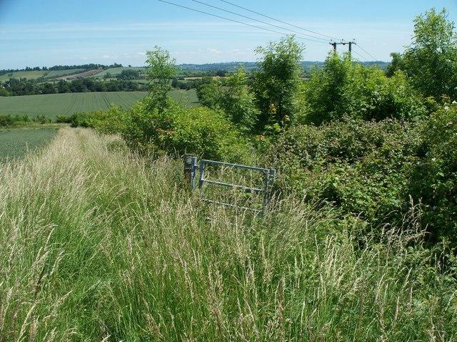 Overgrown path [1]