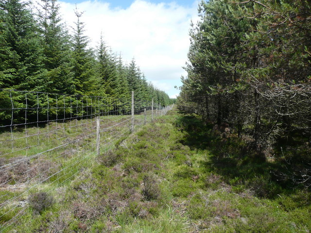 Deer fence heading up Hare Hill