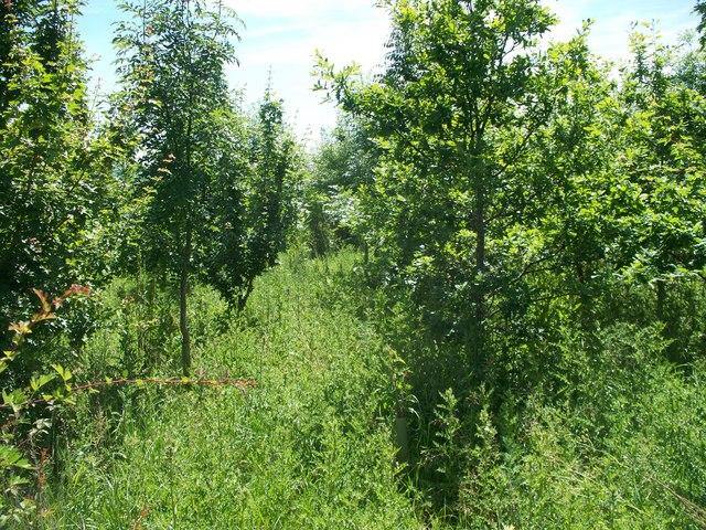 Overgrown path [2]