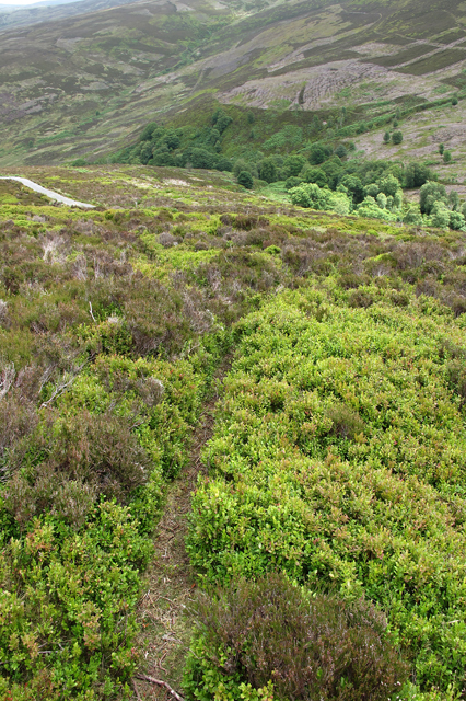 Track through bilberry and heather to Hawthornthwaite Fell Top