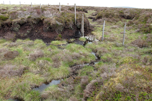 Boundary fence and boggy ground on Holdron Moss
