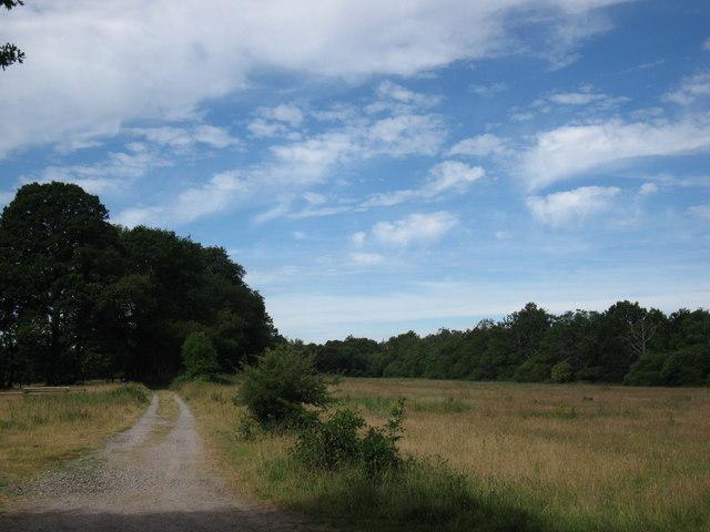 Path and grassland
