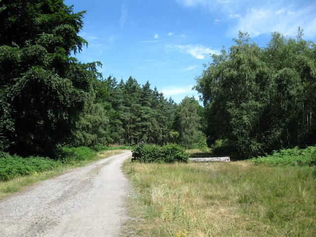 Overgrown horse jump