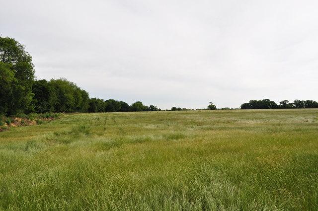 Fields from Peddars Way