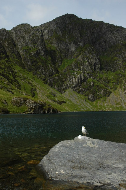 Pair of seagulls and Llyn Cau