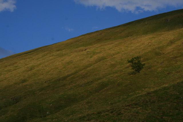 Solitary tree, Glen Cuirnean