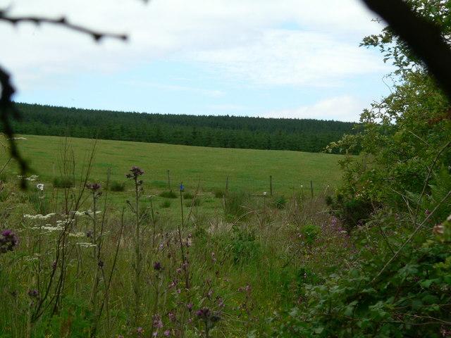 Edge of huge forest on Gartloskan hill