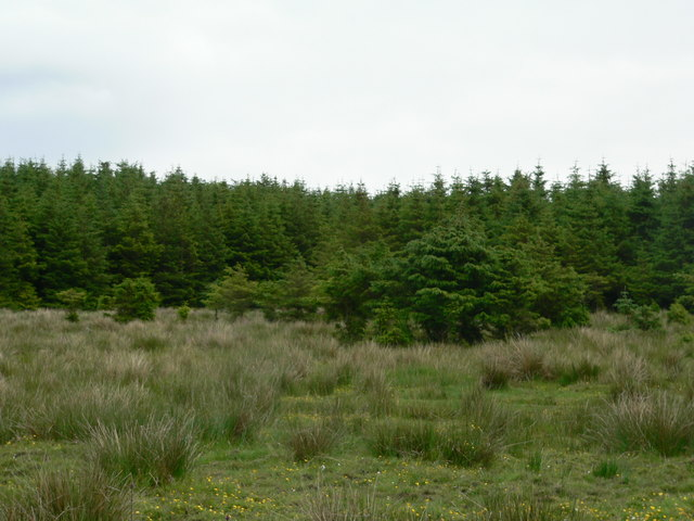 Poor take of trees on edge of forest