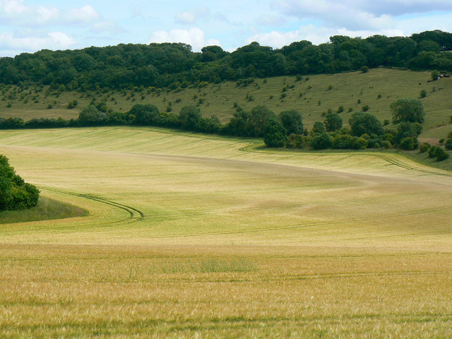Field of barley, near Preston