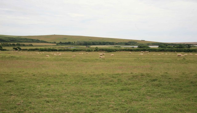 Sheep as seen from the pathway