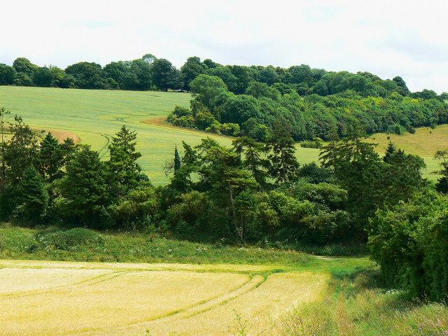 Woodland strip, near Preston
