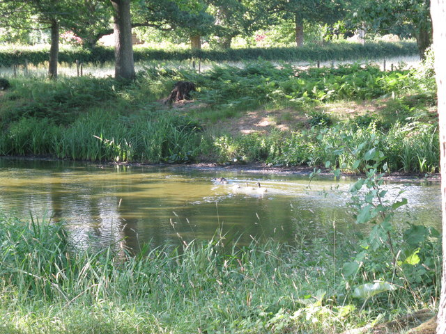 Ducks on shaded pond just off Fowly Lane