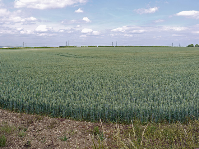 Wheat Field on Horkstow Wolds