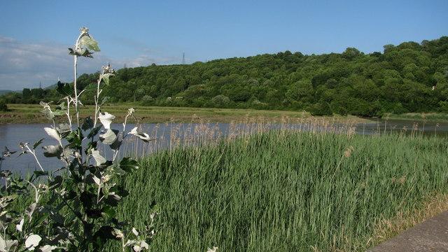 River Usk Reedbeds