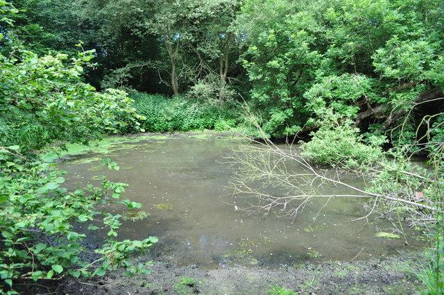 Pond in Wayland Wood