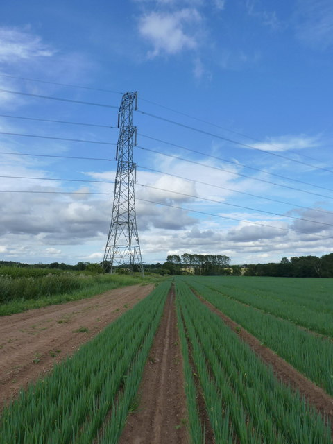 Big pylon and spring onions
