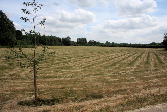 Hay field at Clare