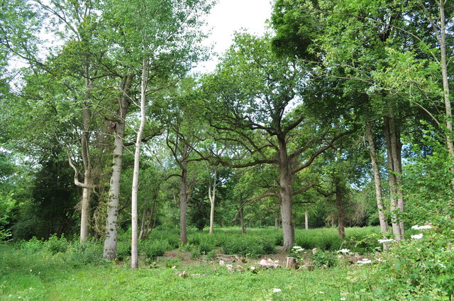 Recently Coppiced Woodland