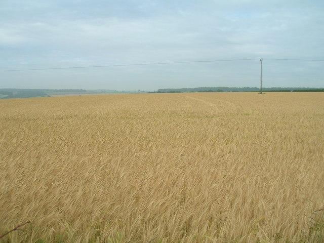 Farmland near Cowlam Manor