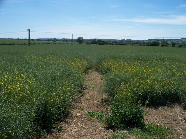 Path in the crops