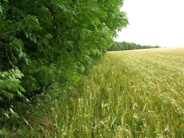 Edge of Croome Dale Plantation