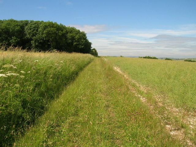 Bridleway towards Squirrel Hall Farm