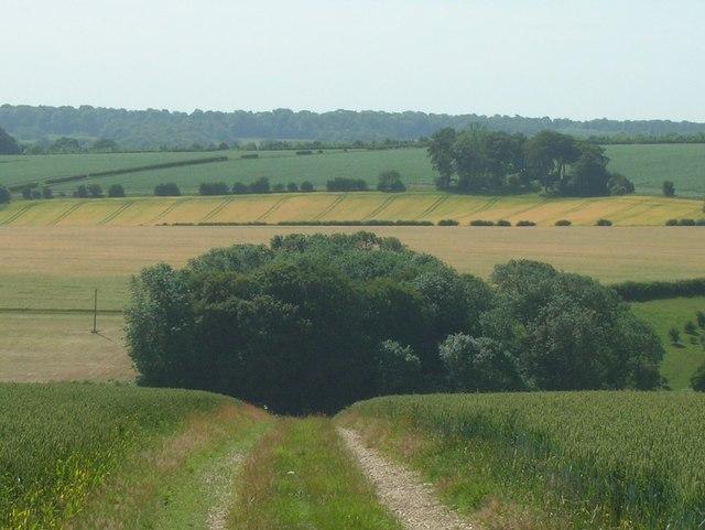 Farm track near  Squirrel Hall Farm