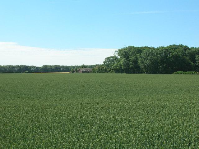 Farmland looking towards Top Barn