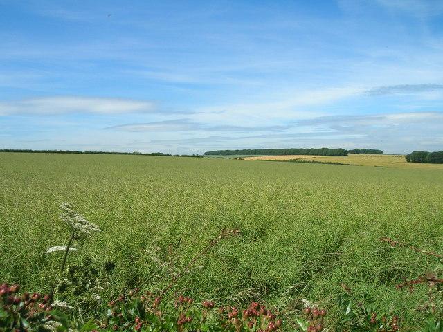 Farmland off Kirby Lane