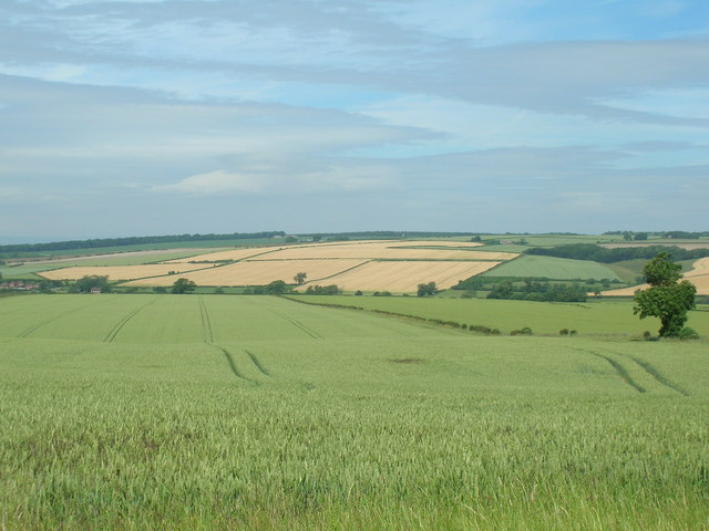 Wolds Farmland, Low Mowthorpe