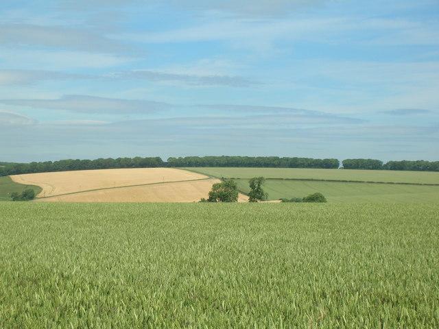 Farmland near Duggleby