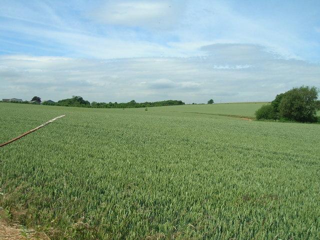 Farmland near Wharram le Street