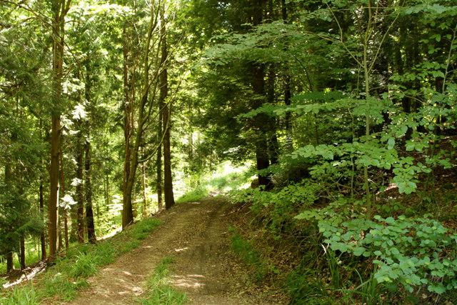 2010 : Track in Marshfield Wood