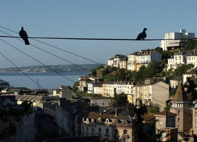 Pigeons above Torquay